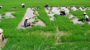 Đất nông nghiệp theo quy định pháp luật