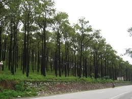 Quy định về Đất rừng sản xuất