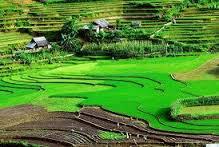 Hạn mức nhận chuyển quyền sử dụng đất nông nghiệp
