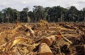 Tư vấn về tội huỷ hoại rừng