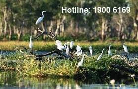 Tội vi phạm các quy định về quản lý khu bảo tồn thiên nhiên