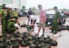 Tội vi phạm các quy định về bảo vệ động vật thuộc danh mục loài nguy cấp, quý, hiếm được ưu tiên bảo vệ