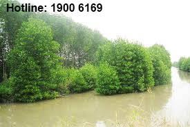 Quy định về Đất rừng phòng hộ