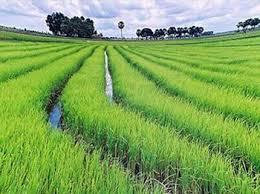 Tư vấn đăng ký ngành nghề kinh doanh trồng cây nông nghiệp hàng năm