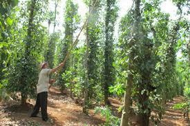Tư vấn đăng ký ngành nghề kinh doanh trồng cây lâu năm
