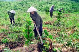 Đăng ký kinh doanh trồng rừng và chăm sóc rừng