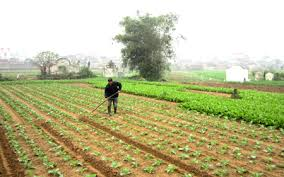Tư vấn đăng ký kinh doanh hoạt động dịch vụ trồng trọt