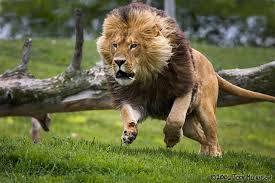 Vận chuyển động vật hoang dã có vi phạm pháp luật không?