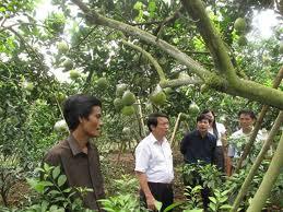 Quy định về Đất sử dụng cho kinh tế trang trại