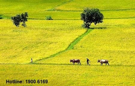 Tư vấn về gia hạn sử dụng đất nông nghiệp