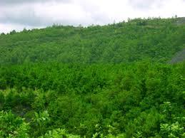 Tội vi phạm các quy định về quản lý rừng hiểu thế nào?