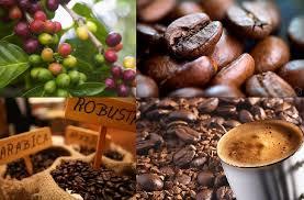 Kinh doanh cafe có cần thành lập công ty không?