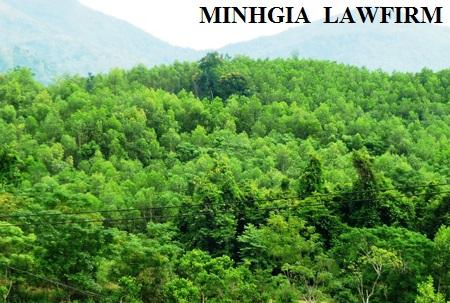 Xử phạt hành chính hành vi vi phạm quy định về sử dụng đất đai