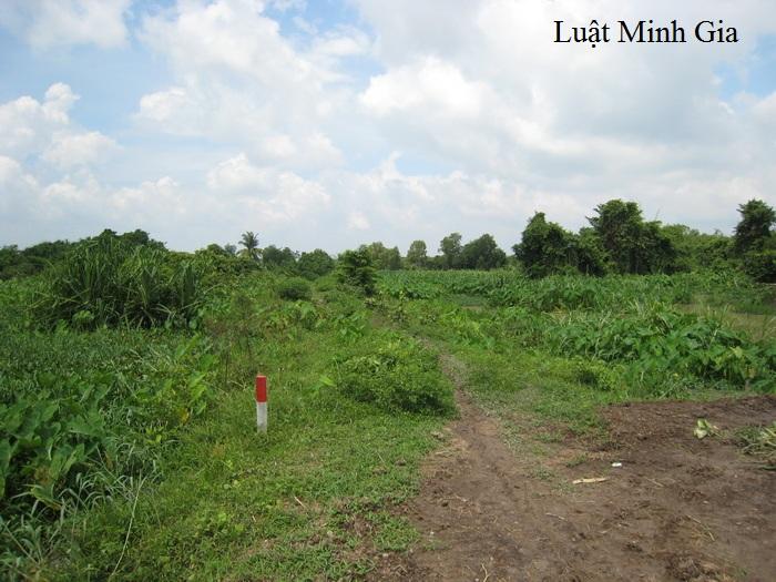 Quy định về đất nông nghiệp khai hoang vượt quá hạn mức công nhận