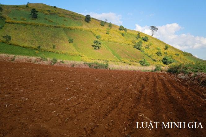 Tư vấn về thủ tục chuyển mục đích sử dụng đất và cấp sổ đỏ