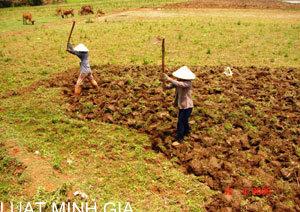 Cấp giấy chứng nhận quyền sử dụng đất cho diện tích đất vỡ hoang năm 1992