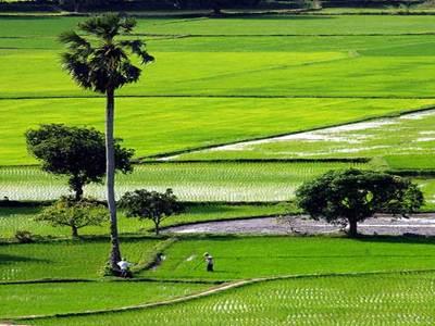 Chuyển từ đất vườn ao sang đất ở theo quy định thế nào?