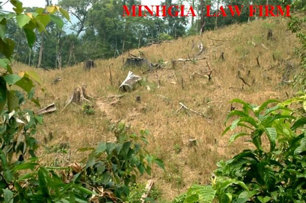 Cấp GCNQSD đất đối với đất khai hoang, sử dụng ổn định