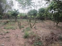 Hỏi luật sư tư vấn về thu hồi/hủy giấy chứng nhận quyền sử dụng đất