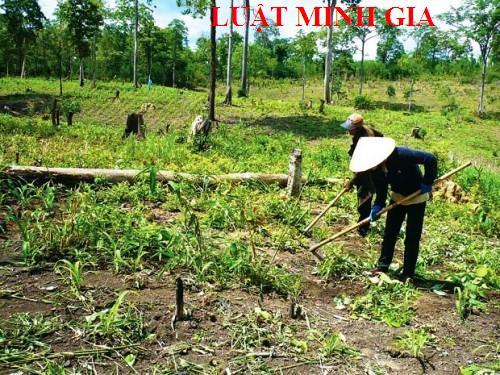 Đất đã có bìa xanh, có phải xin phép khi trồng và khai thác gỗ?