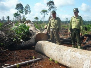 Phụ cấp kiêm nhiệm đối với ban quản lý rừng phòng hộ