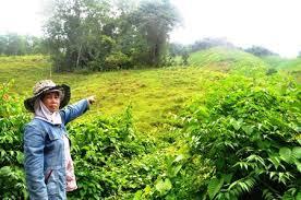Tư vấn về vấn đề bồi thường do thu hồi đất đối với đất khai hoang