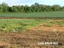 Tư vấn về thừa kế quyền sử dụng đất theo pháp luật