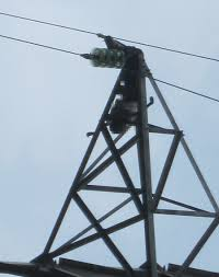 Hành vi tự ý di chuyển cột điện
