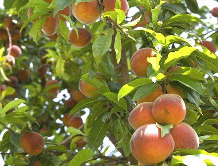 Đòi bồi thường tài sản khi hàng xóm trồng cây trên đất nhà mình.