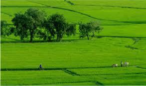 Hỏi về nhận chuyển nhượng đất nông nghiệp