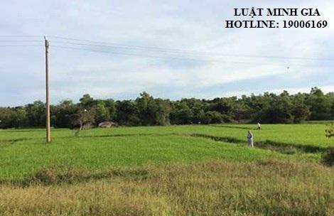 Tư vấn về thủ tục tách thửa đất đối với đất nông nghiệp.