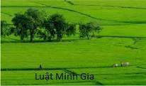 Trường hợp nào thì người Việt Nam định cư ở nước ngoài được sở hữu nhà ở Việt Nam