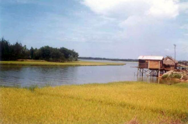 Tư vấn chuyển đổi đất trồng lúa sang đất trồng cây hàng năm