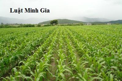 Chuyển đổi trồng lúa sang trồng cây hàng năm theo quy định của luật đất đai