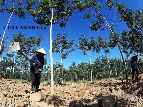 Tư vấn về bồi thường đất rừng khi bị thu hồi đất