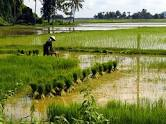 Tư vấn về chuyển nhượng đất nông nghiệp