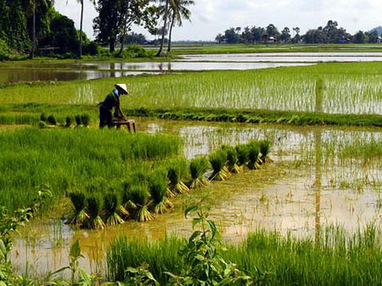 Tư vấn về quyền sử dụng đất nông nghiệp của hộ gia đình