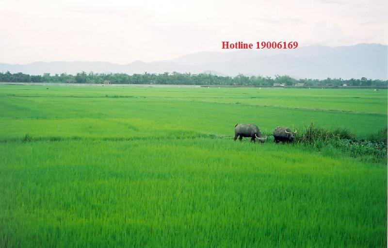 Giá đất bồi thường khi Nhà nước thu hổi đất tại Đông Anh, Hà Nội.