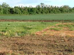 Thủ tục chuyển nhượng đất trồng cây lâu năm