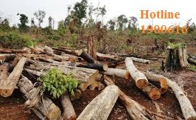 Chặt phá rừng trái phép có bị truy cứu trách nhiệm hình sự.