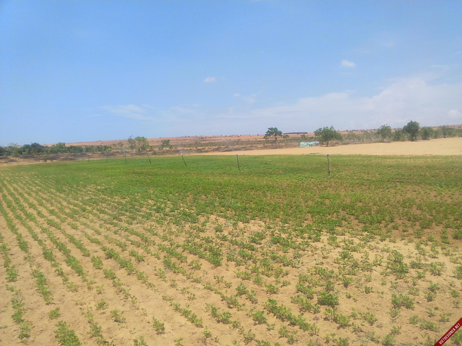 Tư vấn về tranh chấp chuyển quyền sử dụng đất nông nghiệp