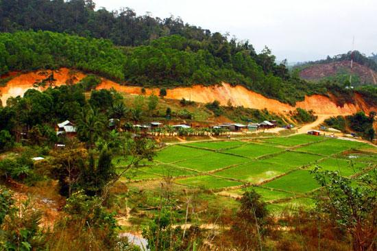 Tách thửa đất nông nghiệp trồng cây hàng năm có được không?