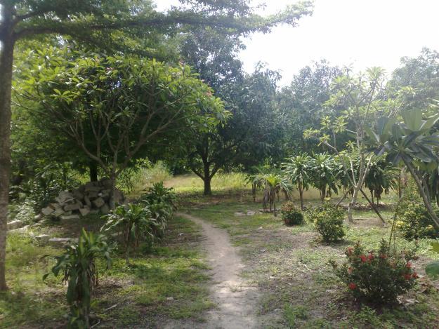 Hỏi về bồi thường khi bị thu hồi đất trồng cây lâu năm
