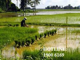 Luật sư tư vấn chuyển mục đích sử dụng đất nông nghiệp theo quy định
