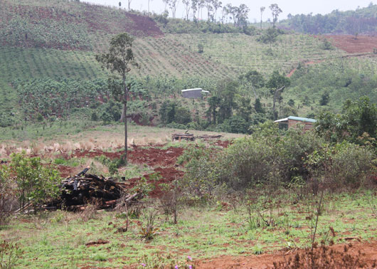 Bồi thường thu hồi đất khai hoang từ năm 1965
