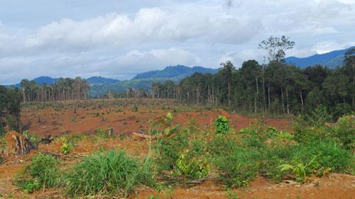 Chuyển đổi mục đích sử dụng đất lâm nghiệp