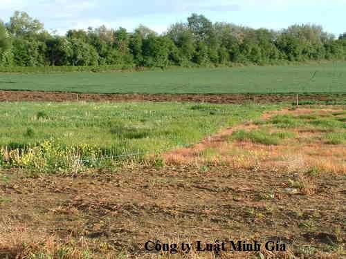 Bị kiện về việc không chịu ký đất giáp ranh được cho là tranh chấp đất đai