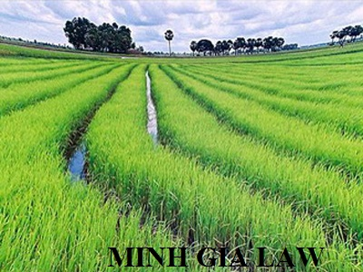 Tư vấn về thẩm quyền xử phạt vi phạm hành chính trong lĩnh vực đất đai