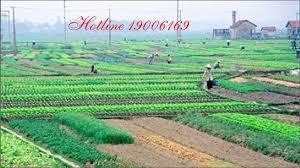 Đất ruộng có thể chuyển sang đất cho thuê?