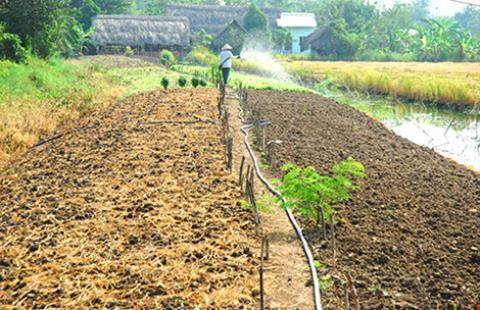 Chuyển từ đất trồng lúa sang nuôi, trồng thuỷ canh được không?